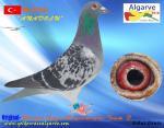 AGR-2016  #170  TR-147641Recep-Em¡n Bayramoglu-Team F