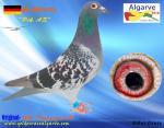 AGR-2016   # 670         DE-09491-276    SG Tamoszus- B