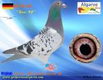 AGR-2016   # 810      DE-748-592      Xaver Heinloth-Team C