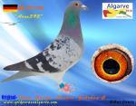 AGR-2016   # 2310            DE-1777-395Team Helios, Bucher + Gehrken-C