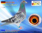 AGR-2016  #410   DE-6723-6049  Dieter Siebert-A