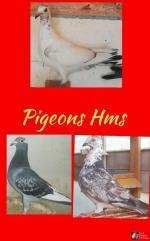 G.C. Pérola Atlântico - 1432222-21 - Pigeons Henry Santos