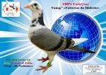 PT 8083318/18 Consg.º «Narbonne» e «Cattrysse Idalécio» (100% Cattrysse)