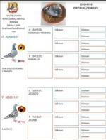 Leilão secção columbófila do Torrense - 8050840/18    Correia & Caramelos