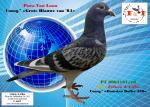8083161/18 Consg.ª «Dourdan Doffer 530» e «Grote Blauwe van 84» (Pura Van Loon)