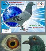 DV 02618-13-385 � Bisneto �Den Euro� e �Goudklompje� (Puro Heremans-Ceusters)