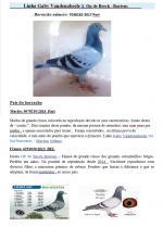 Highlight José Augusto Barbosa - POR-7038182/17      Gaby/Op de Beek Baetens