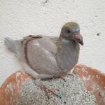C.C. S. Martinho - PT 0377097-20 - Casa Vicente